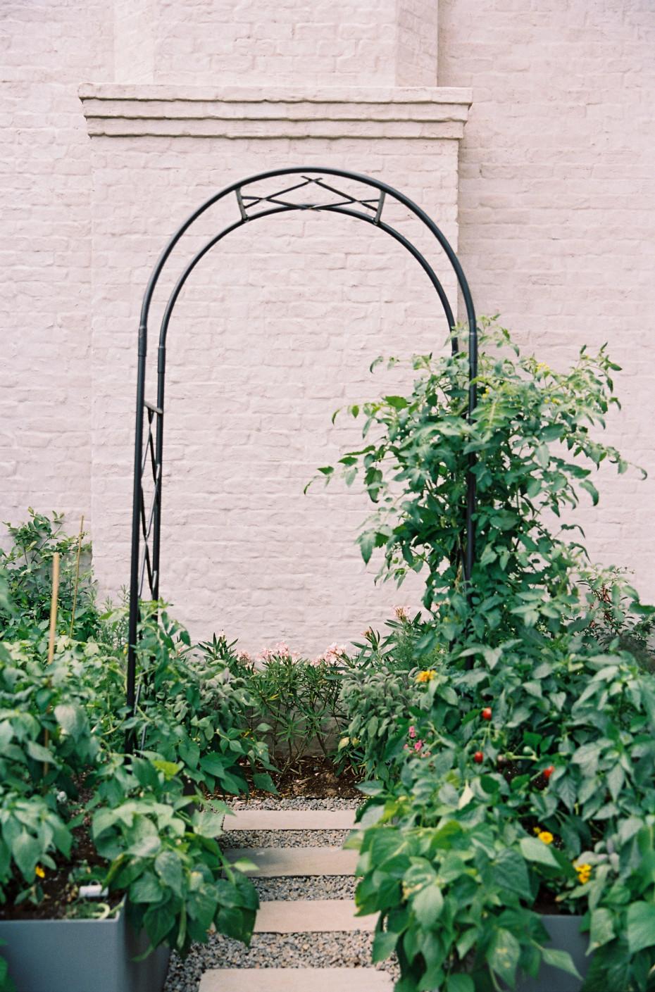 arch trellis for the garden ideas