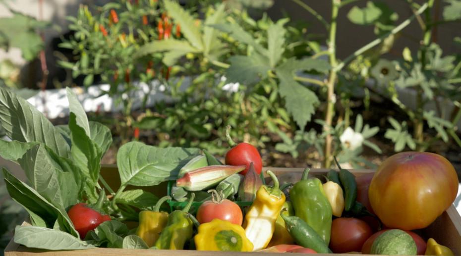 Home Grown Veggie