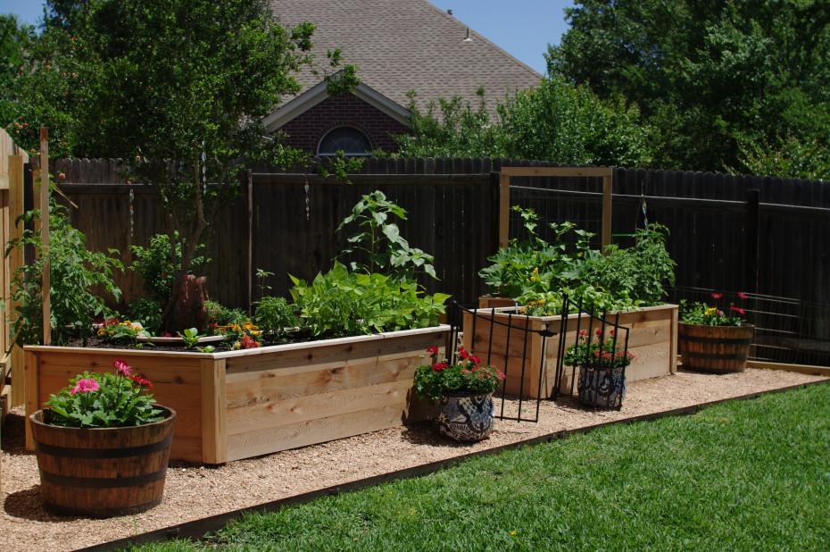 Lettuce Grow Something