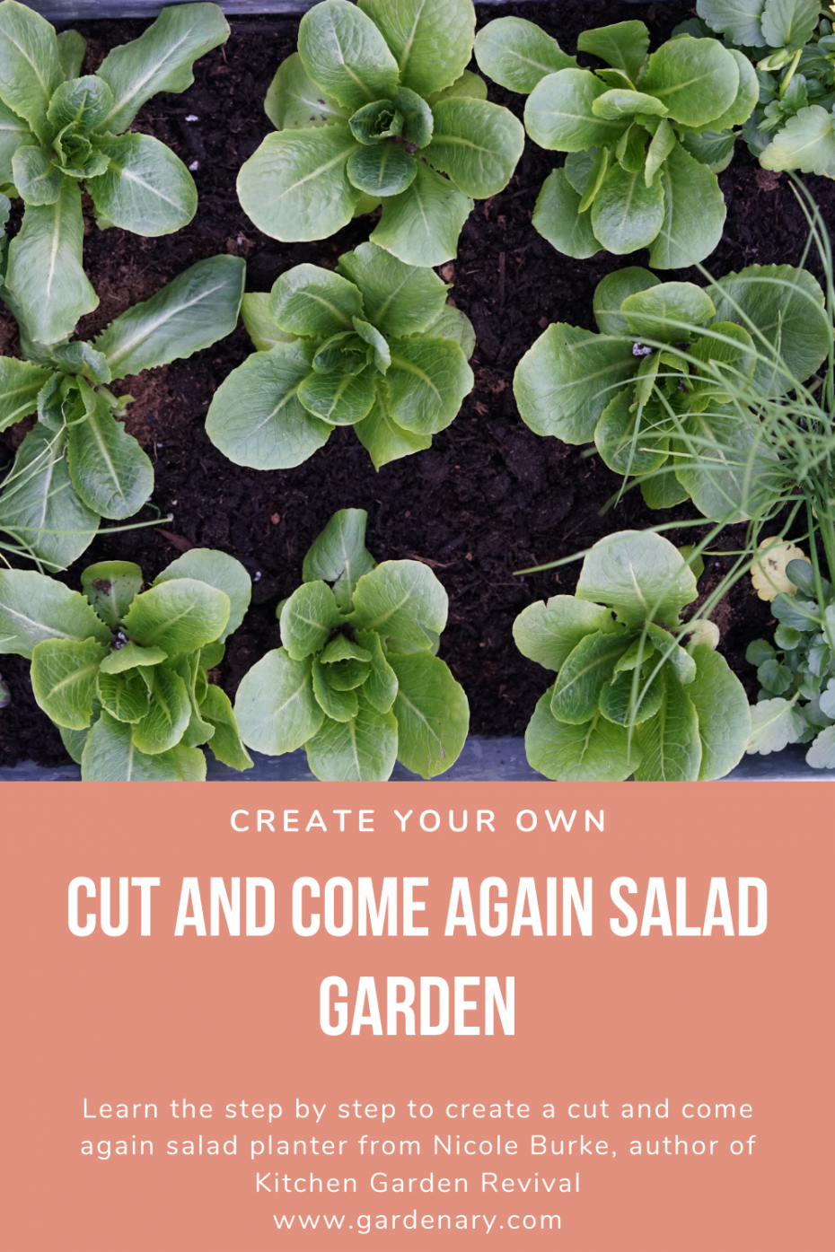 create your own cut and come again salad garden from Nicole Burke author of Kitchen Garden Revival