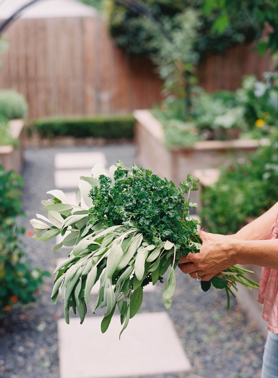 How to Start an Herb Garden, Nicole Burke, author of Kitchen Garden Revival, holds sage and curly parsley