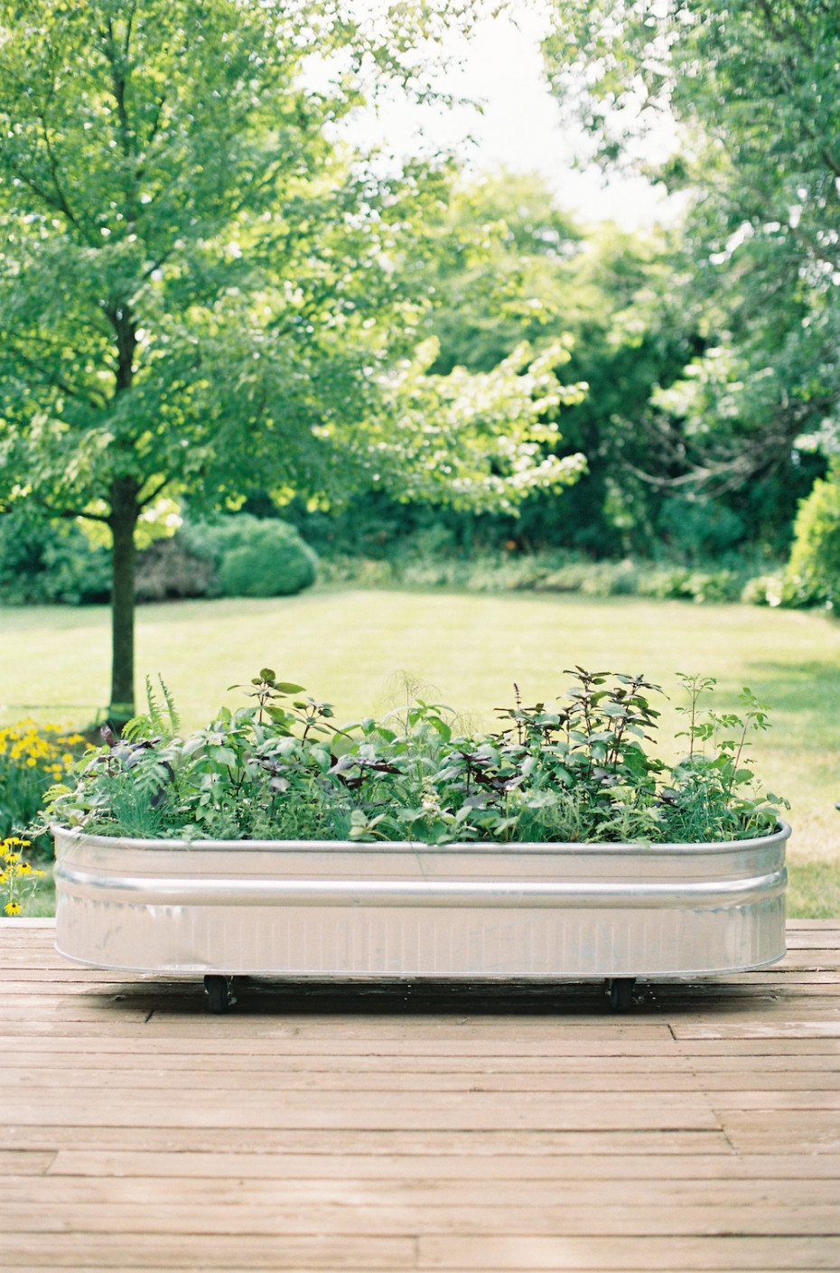 How to start an herb garden with Nicole Burke author of Kitchen Garden Revival