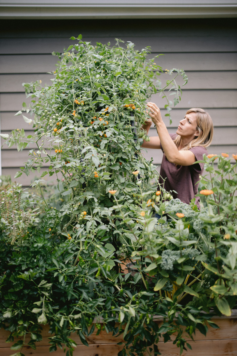 The Truth About Tomatoes on the Grow Your Self Podcast