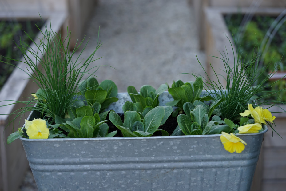 Materials needed to create a cut and come again salad planter taught by Nicole Burke author of Kitchen Garden Revival